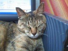 猫にSweets-SN3M0077.jpg