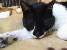 猫にSweets-SN3M0080.jpg