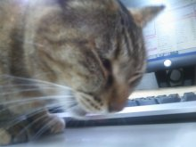 猫にSweets-SN3M0092.jpg