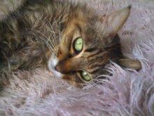 猫にSweets-SN3M0096.jpg