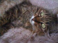 猫にSweets-SN3M0097.jpg