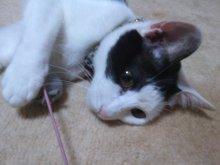 猫にSweets-SN3M0100.jpg