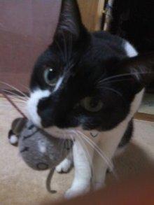 猫にSweets-100521_2301~01.jpg