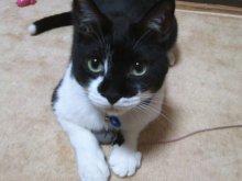 猫にSweets-SN3M0098.jpg