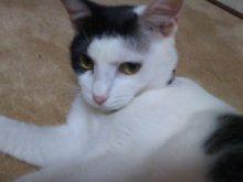 猫にSweets-SN3M0099.jpg