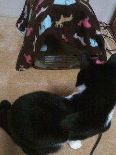猫にSweets-100525_2039~01.jpg