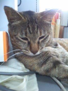 猫にSweets-100521_1721~01.jpg
