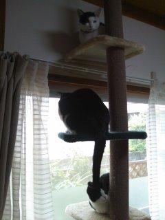 猫にSweets-100528_1631~01.jpg
