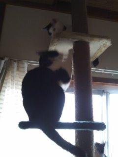 猫にSweets-100528_1632~01.jpg