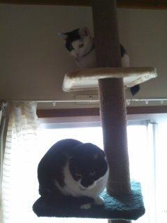 猫にSweets-100528_1633~01.jpg