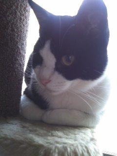 猫にSweets-100528_1629~01.jpg