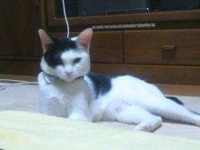 猫にSweets-SN3M0108.jpg