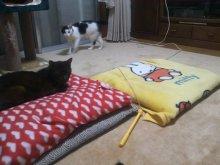 猫にSweets-SN3M0104.jpg