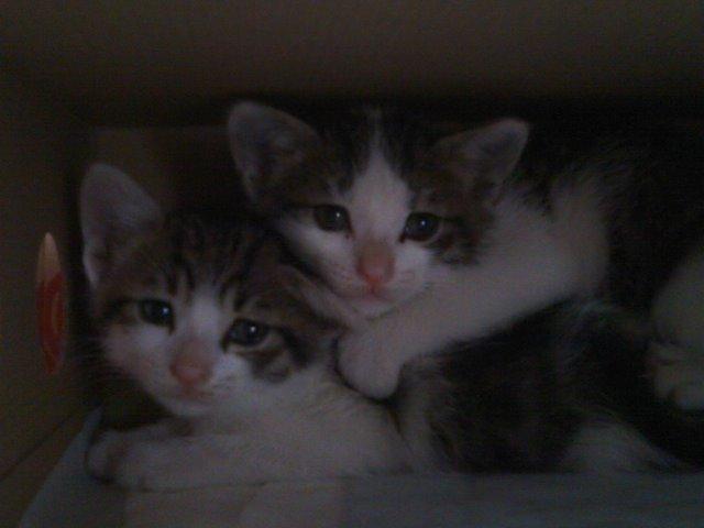 猫にSweets-SN3M0114.jpg