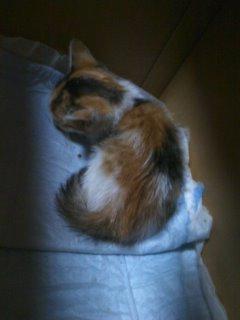 猫にSweets-100609_2104~01.jpg