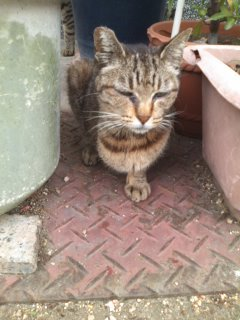 猫にSweets-100608_1604~01.jpg