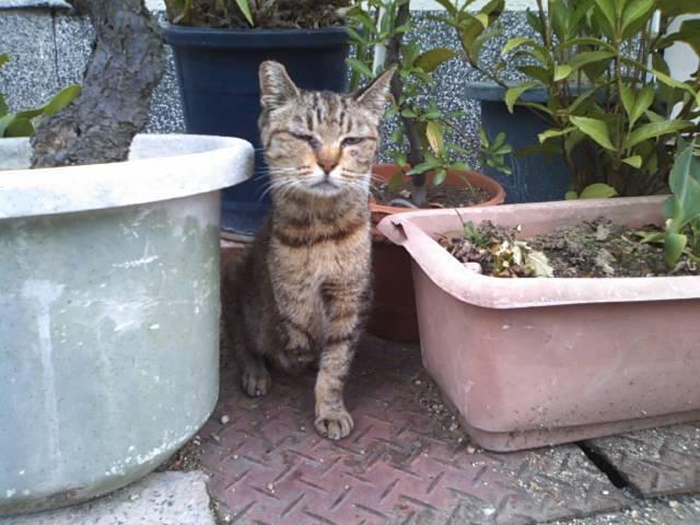 猫にSweets-SN3M0112.jpg