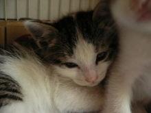 猫にSweets-かんぱち