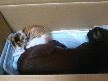 猫にSweets-SN3M0116.jpg