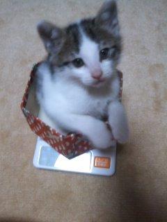 猫にSweets-100615_2000~01.jpg