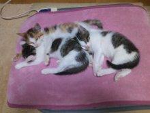 猫にSweets-SN3M0118.jpg