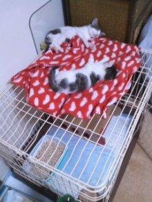 猫にSweets-100617_1149~01.jpg