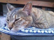 猫にSweets-SN3M0120.jpg