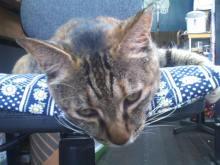猫にSweets-SN3M0122.jpg