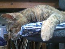 猫にSweets-SN3M0121.jpg