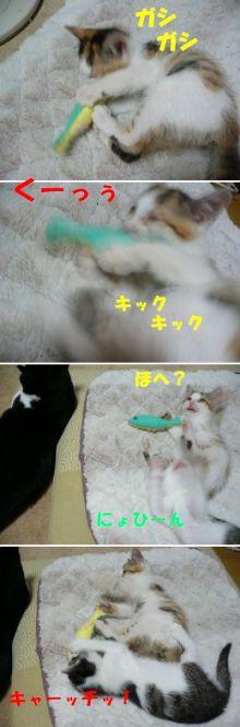 猫にSweets-よこたんVSかんぱち