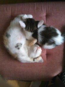 猫にSweets-100625_1202~01.jpg