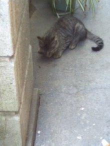猫にSweets-100630_1247~01.jpg