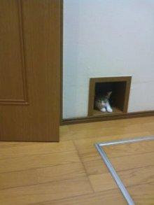 猫にSweets-ネコドア~
