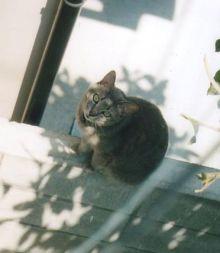 猫にSweets-むいむい