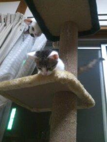 猫にSweets-100706_2226~01.jpg