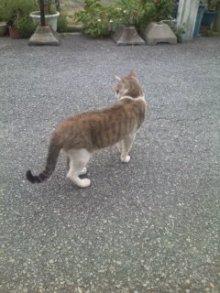 猫にSweets-100706_1814~01.jpg