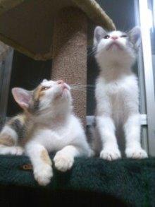 猫にSweets-100706_2224~01.jpg