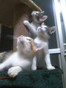 猫にSweets-100706_2225~01.jpg