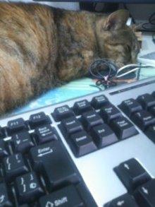 猫にSweets-100707_1756~01.jpg