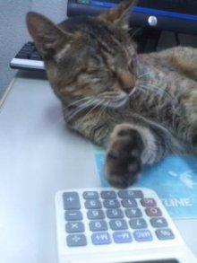 猫にSweets-ニャンコ先生