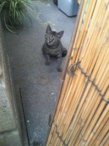 猫にSweets-100710_0927~02.jpg