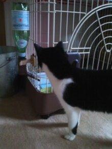 猫にSweets-100710_1559~01.jpg