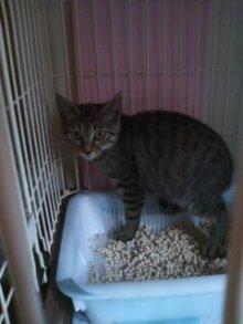 猫にSweets-100710_1545~01.jpg