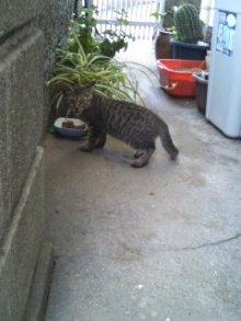 猫にSweets-100712_1153~01.jpg
