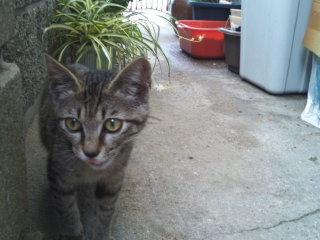 猫にSweets-100712_1153~02.jpg