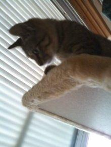 猫にSweets-100716_1513~01.jpg