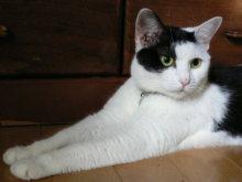 猫にSweets-うしこ