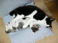猫にSweets-はとやんとひらまさ
