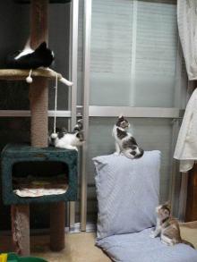 猫にSweets-ねこタワー