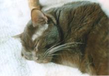 猫にSweets-こげ